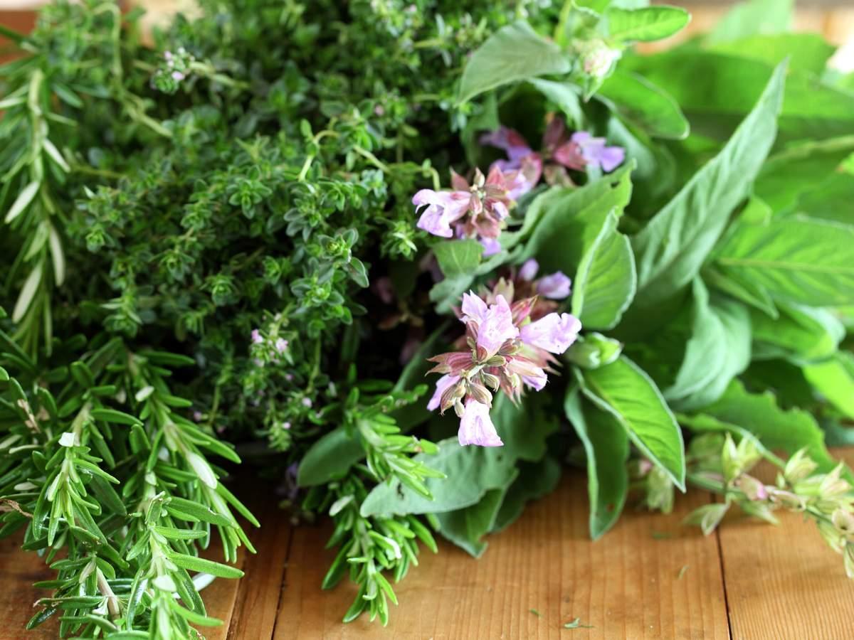 Herbs_5