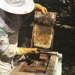 Bees maggiecolin