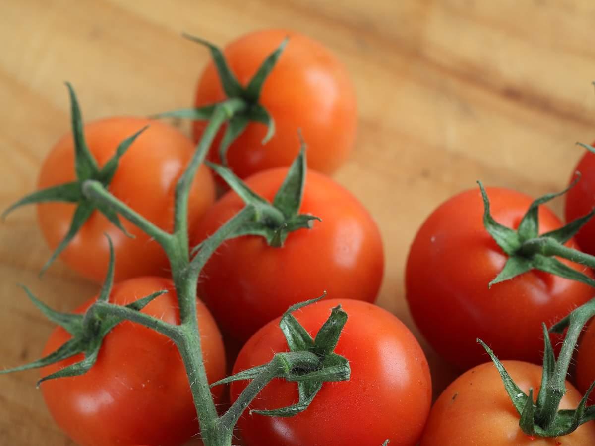 Vine tomatoes04