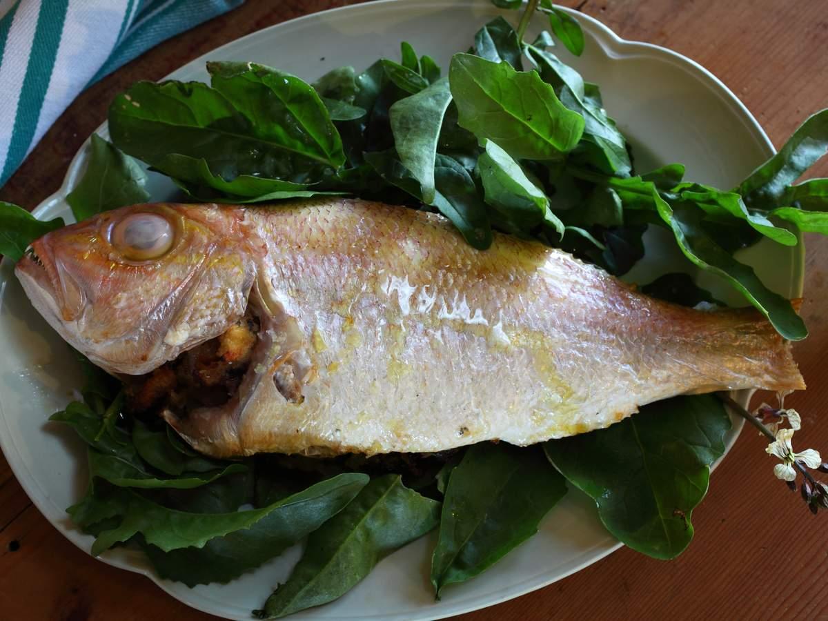 Snapper sorrel pancetta 14